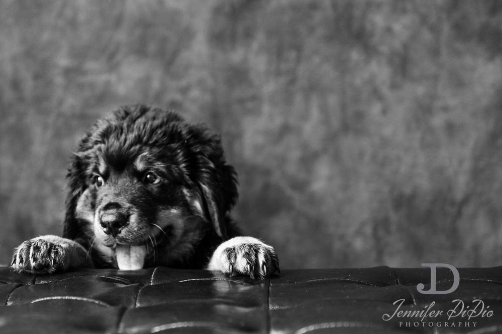 Jennifer.DiDio.Photography.puppy.Stone.Ruby.Madeline-132.jpg