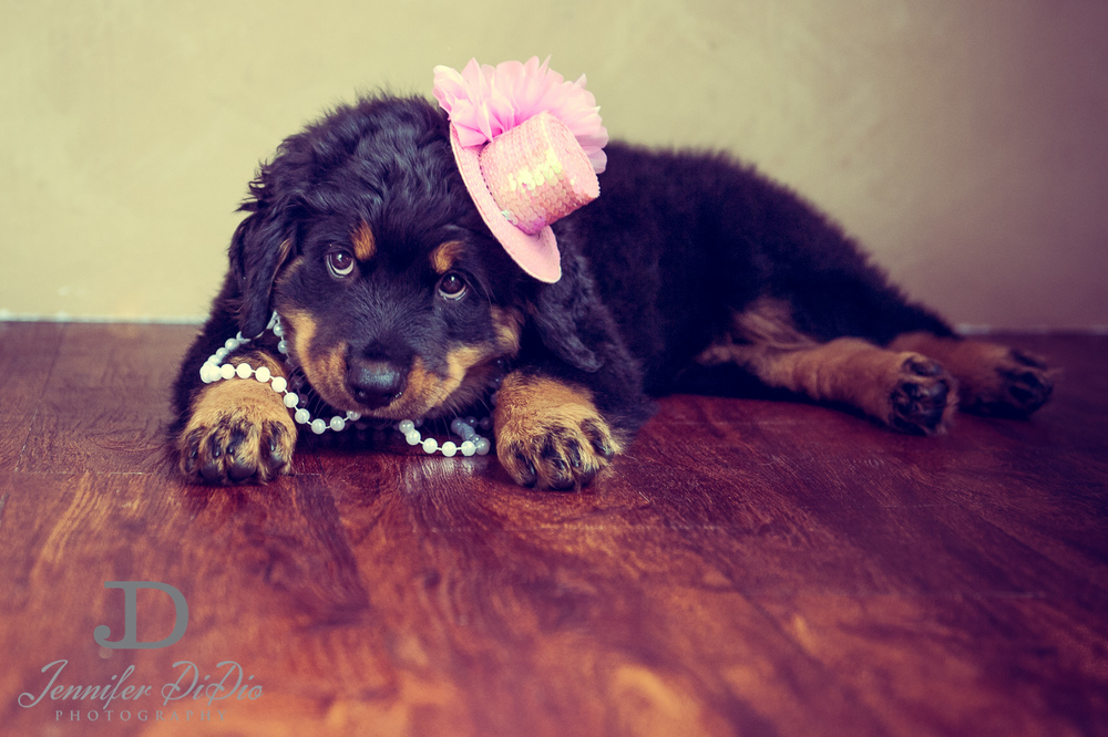 Jennifer.DiDio.Photography.puppy.Stone.Ruby.Madeline-140.jpg