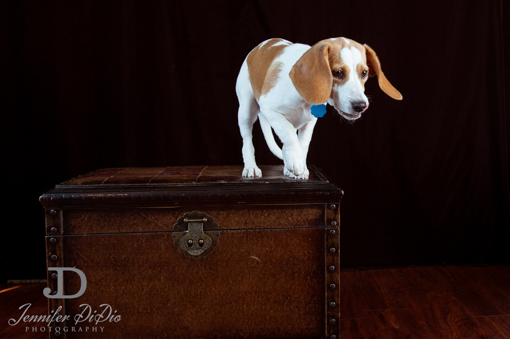 Jennifer.DiDio.Photography.stacey.daisy.dog.2013-15.jpg