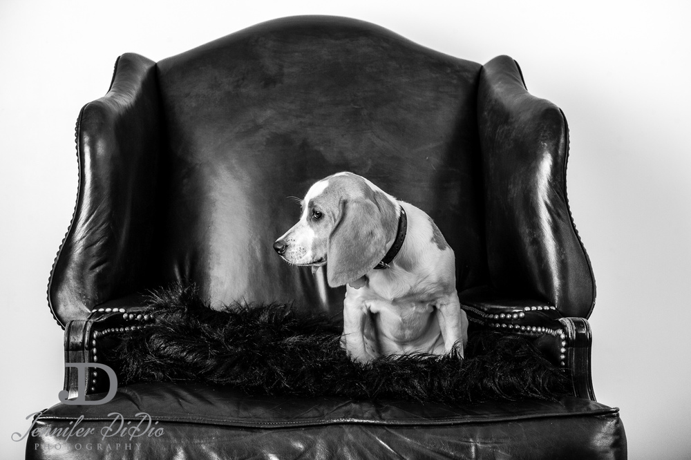 Jennifer.DiDio.Photography.stacey.daisy.dog.2013-62.jpg