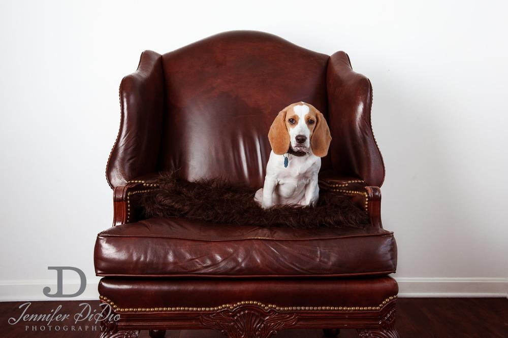Jennifer.DiDio.Photography.stacey.daisy.dog.2013-68.jpg