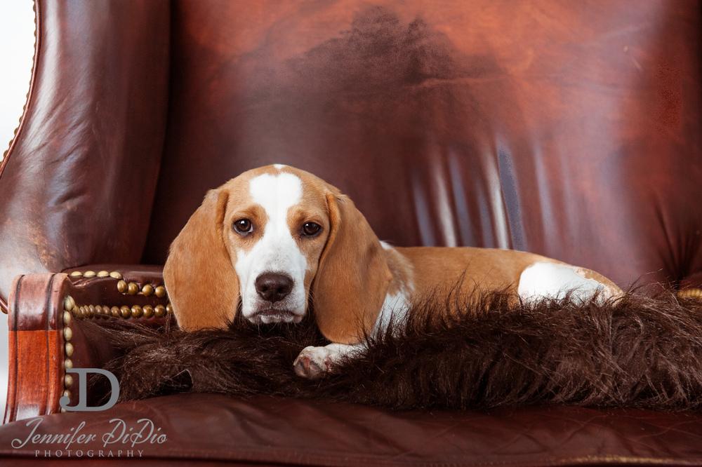 Jennifer.DiDio.Photography.stacey.daisy.dog.2013-83.jpg