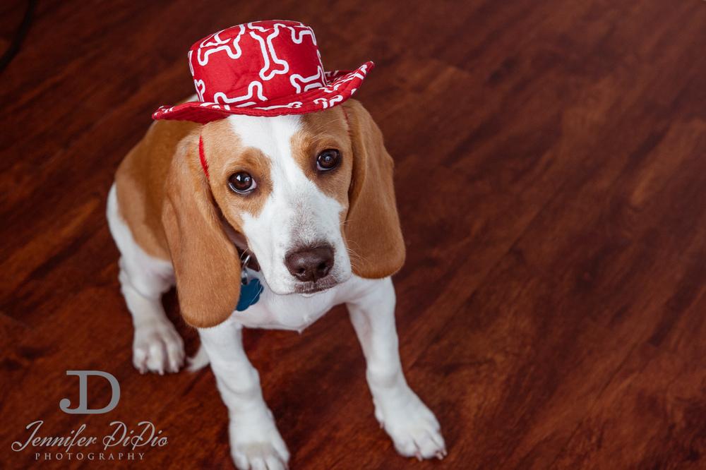 Jennifer.DiDio.Photography.stacey.daisy.dog.2013-105.jpg