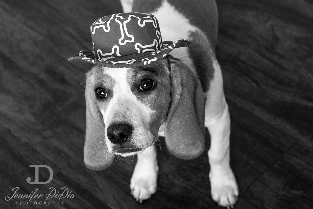 Jennifer.DiDio.Photography.stacey.daisy.dog.2013-107.jpg