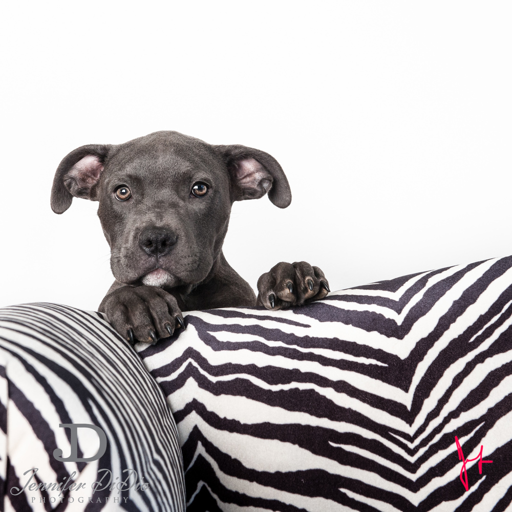 Jennifer.DiDio.Photography.tarlow.aries.dog.2013-15-Edit.jpg