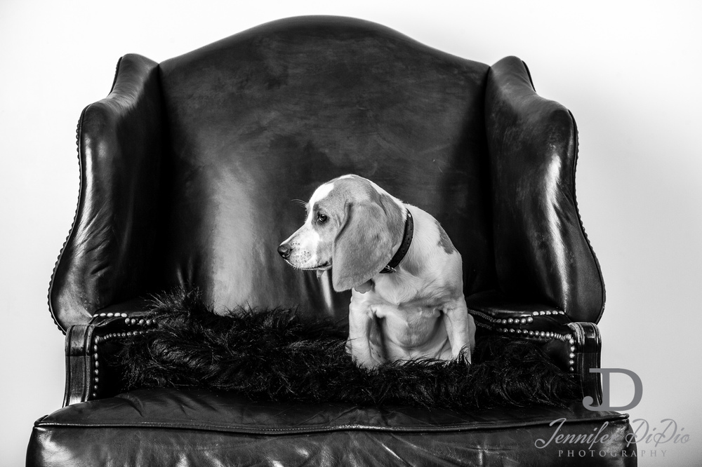 Jennifer.DiDio.Photography.stacey.daisy.dog.2013-62.jpg