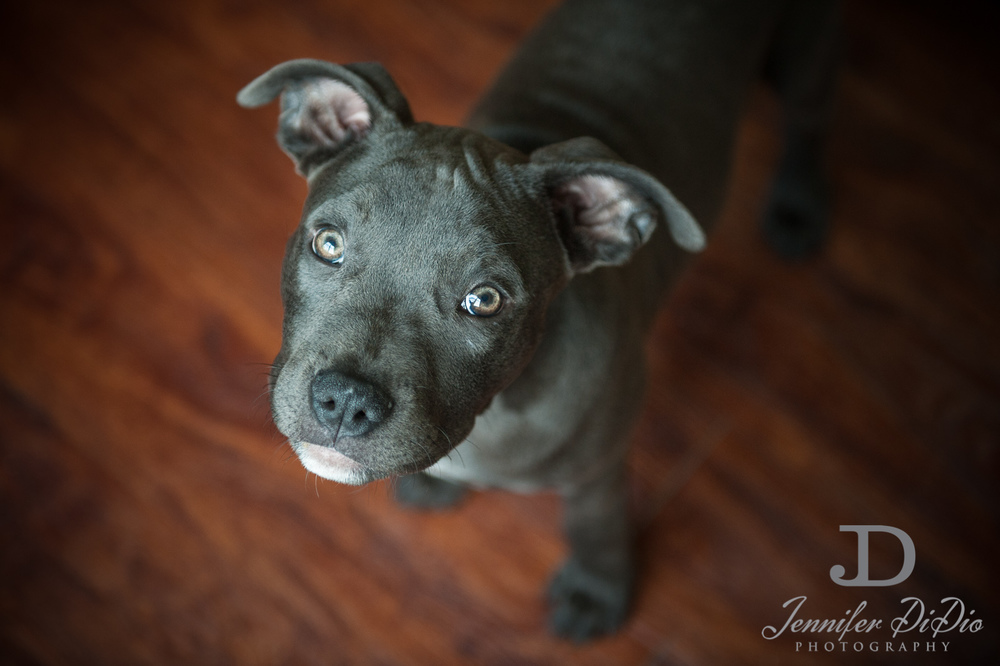 Jennifer.DiDio.Photography.tarlow.aries.dog.2013-99.jpg