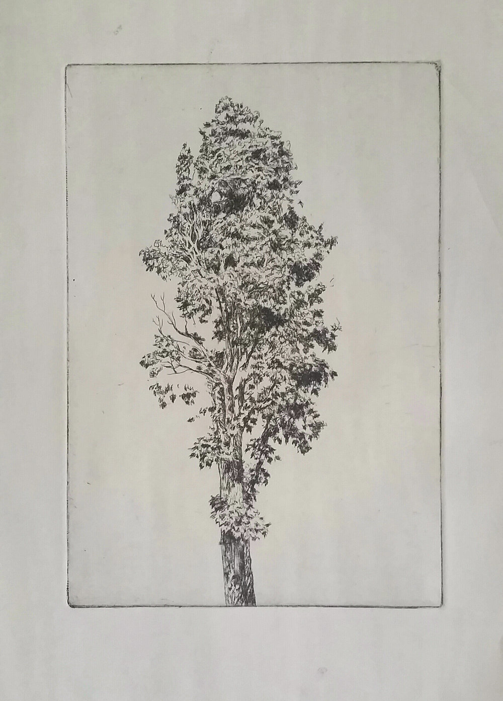 Tree Etching 1