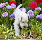 Can you and your green fingers live successfully with canine gardener ?
