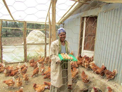 Chickens - C.I.V.