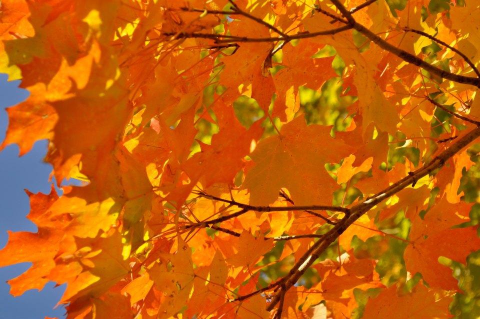 orange canopy.jpg