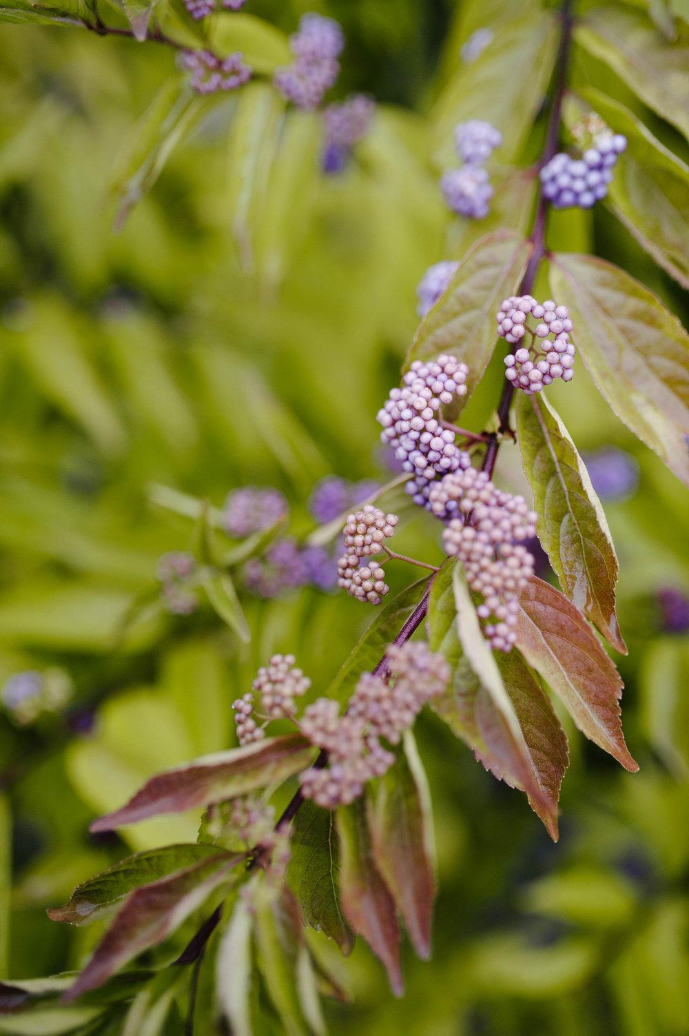 pittsburgh botanic garden wedding-15.jpg