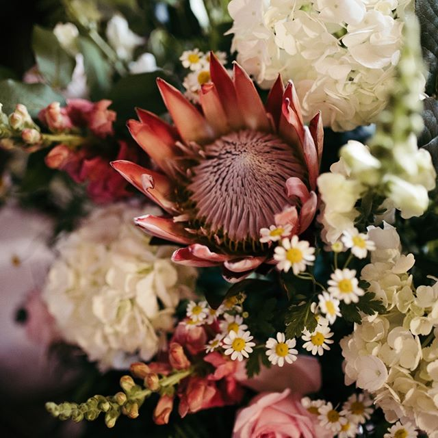 All the #kingprotea for all the bouquets always please.