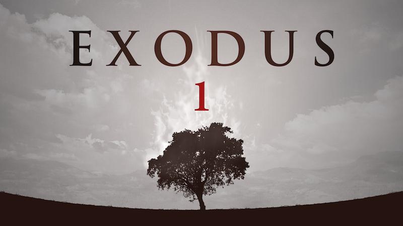 Exodus BG.jpg