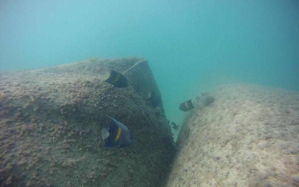 22. Nurai Is Marine Life 3.png