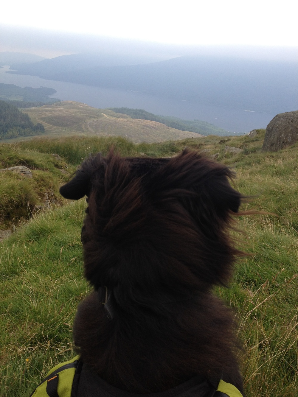 Holly Ben Lomond Back of Head.jpg