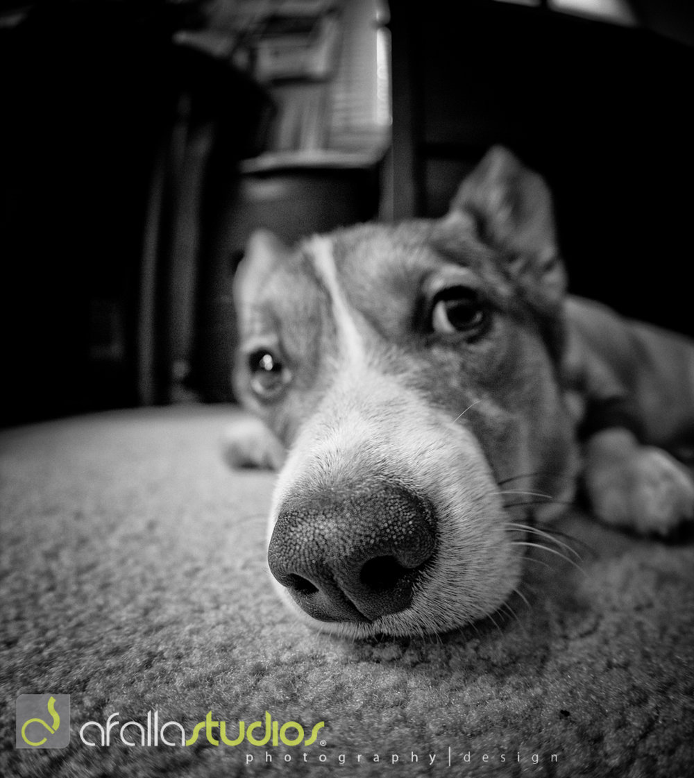 dallas_pet_photography-6.jpg
