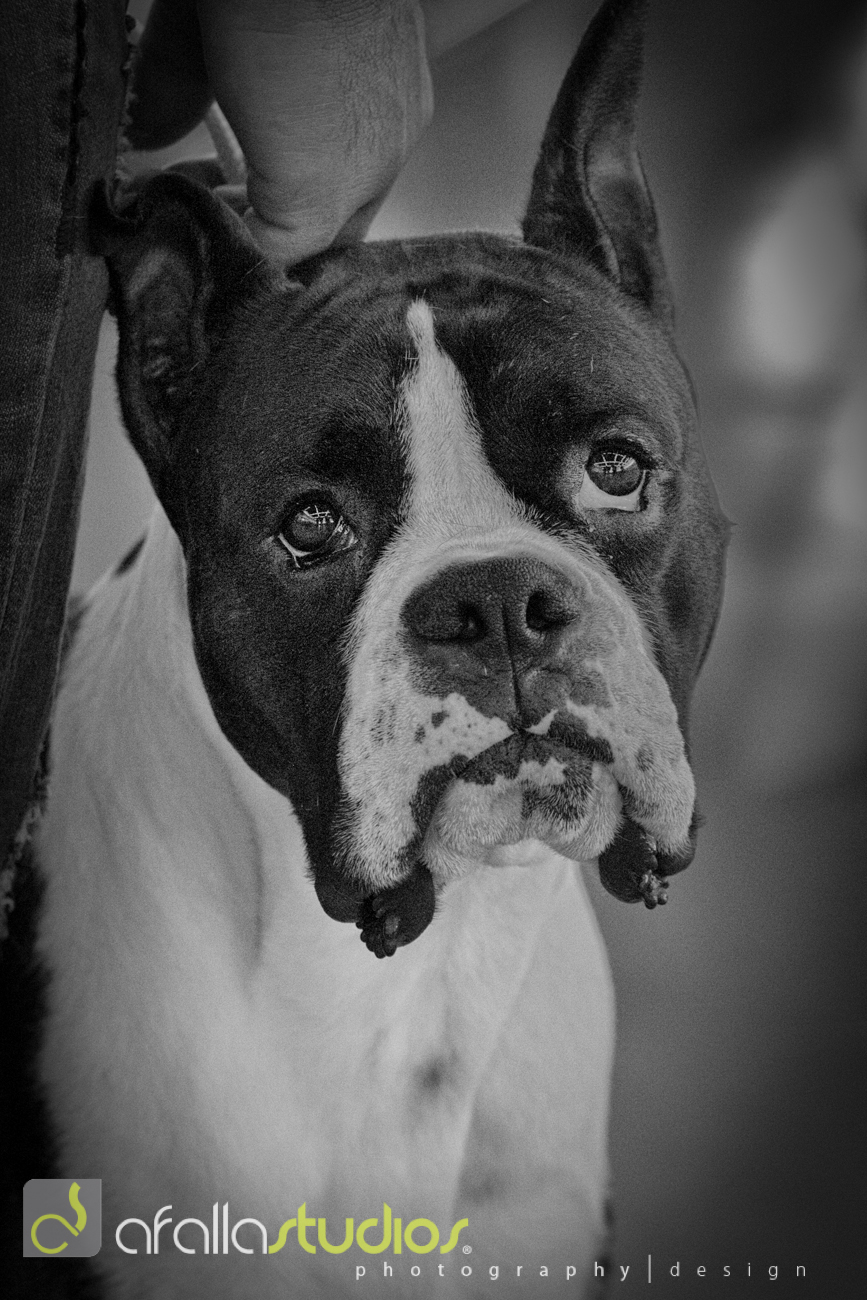 dallas_pet_photography-10.jpg