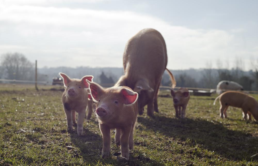 Rosery Farm