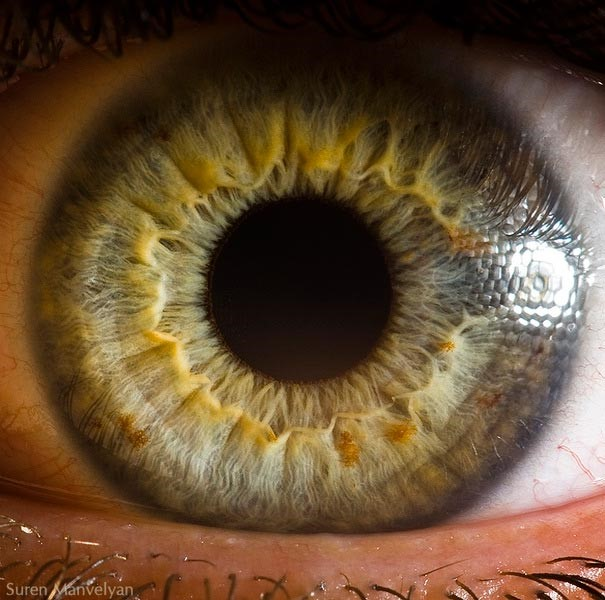 pupil.jpg