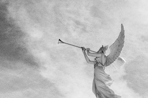 angel-trumpets-by-bradleywindy.jpg