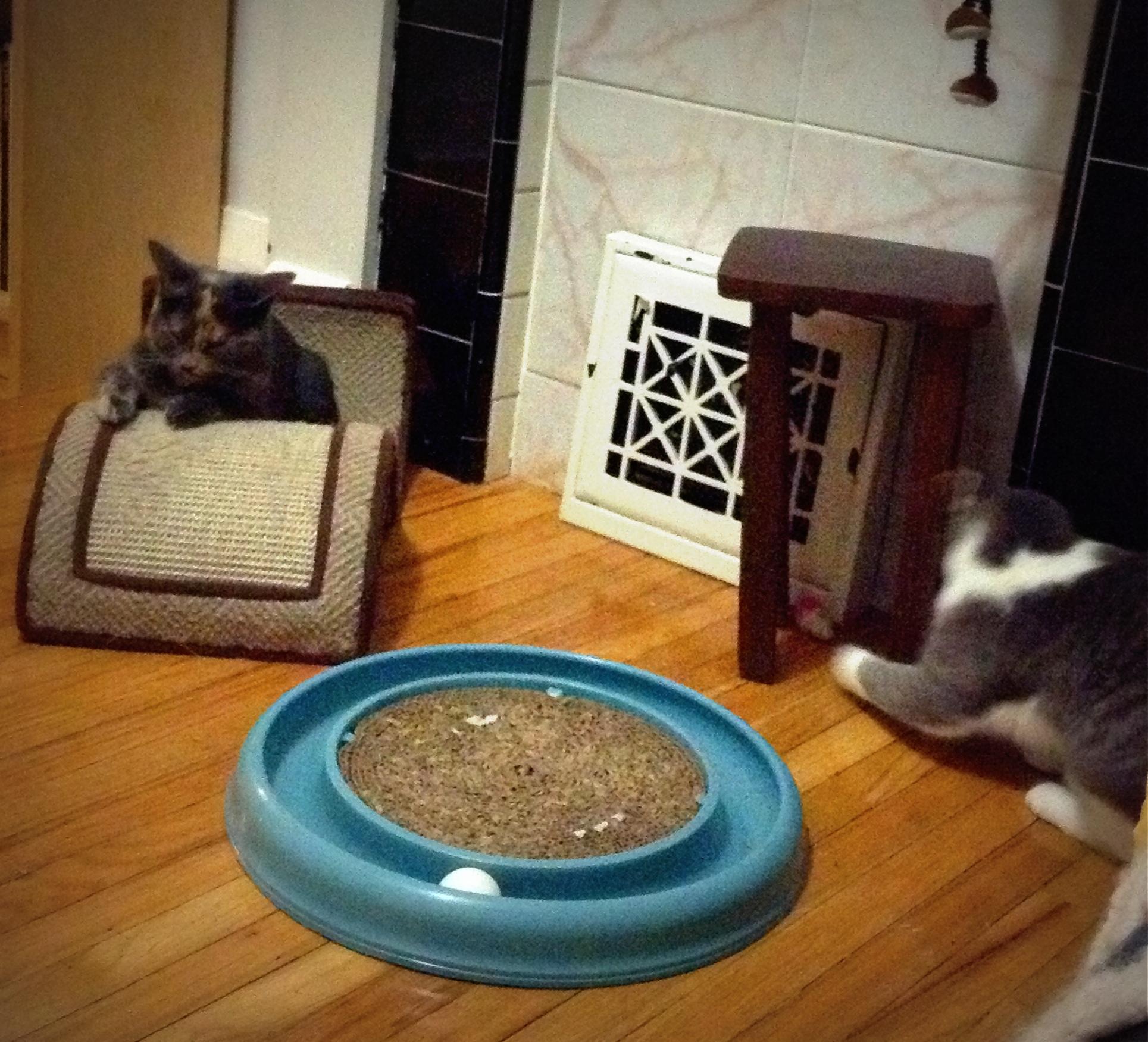 Kittens-13-05-23