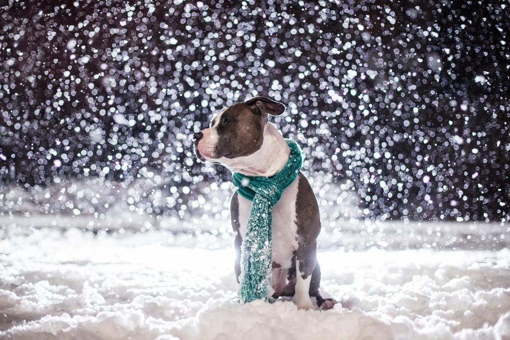 massachusetts-dog-photographer.jpg