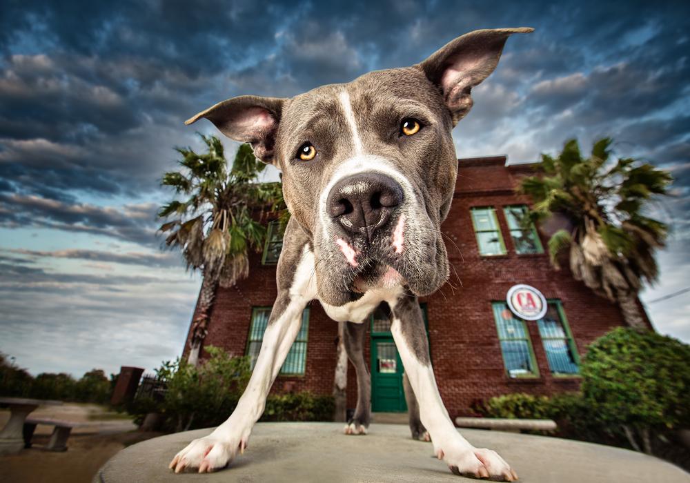 commercial-dog-photographer.jpg