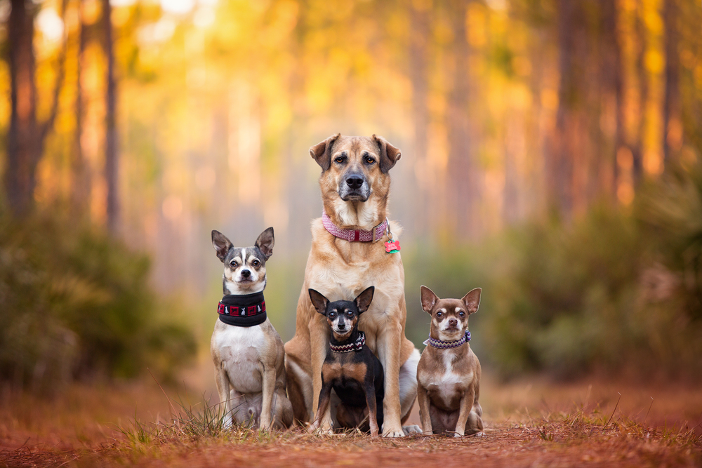 Best Commercial Dog Photographer