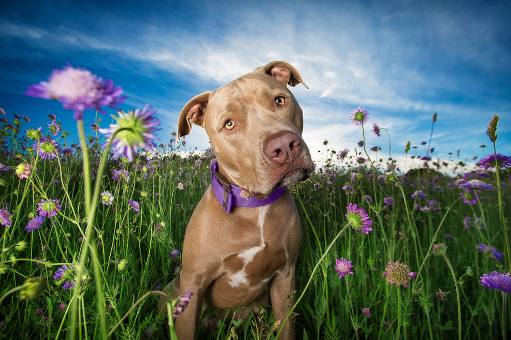 best-commercial-dog-photographer.jpg