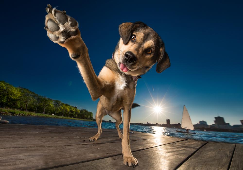 commercial_dog_photo.jpg