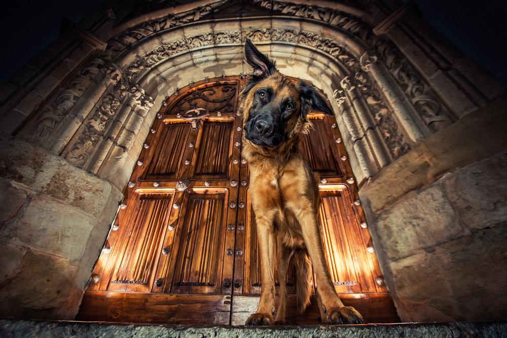 best-dog-photographer.jpg