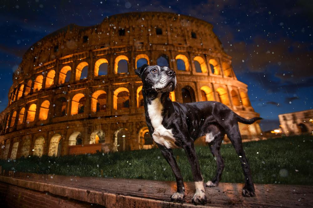 collosseum-dog.jpg
