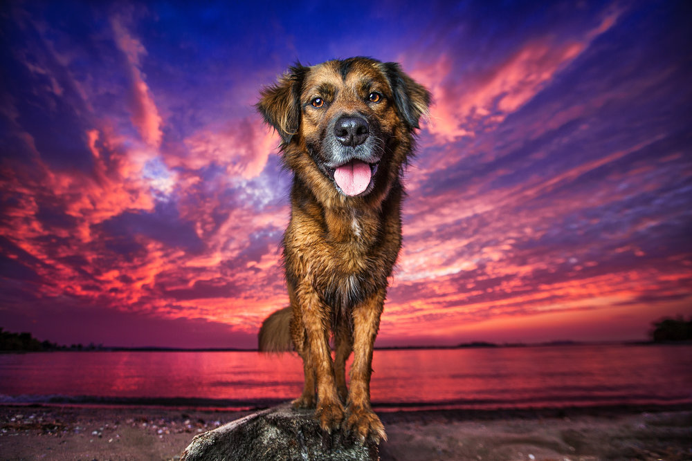 Dog Breath Photography | Boston Dog Photographer