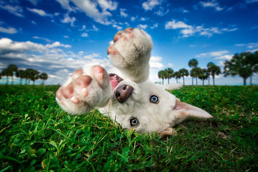 best_dog_photographer.jpg