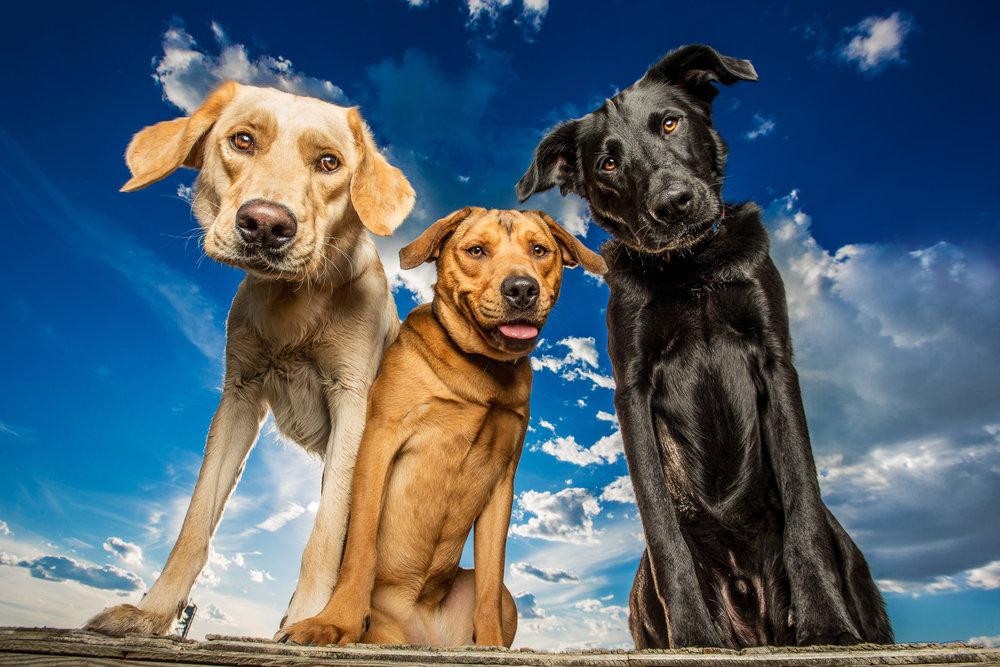 dog_breath_photography.jpg