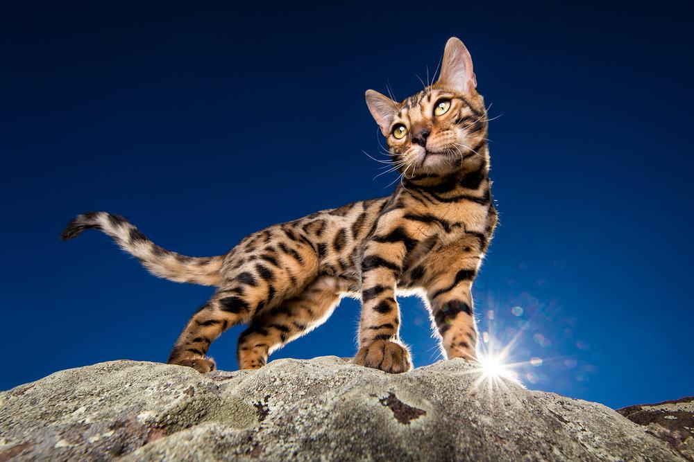 commercial-cat-photographer.jpg