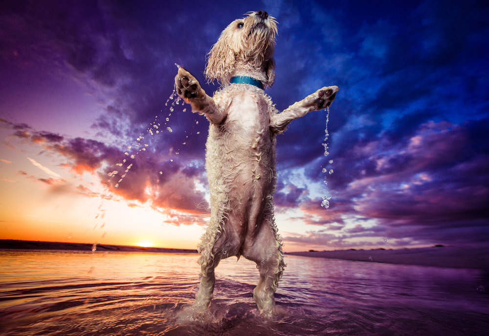 commercial_dog_photographer.jpg