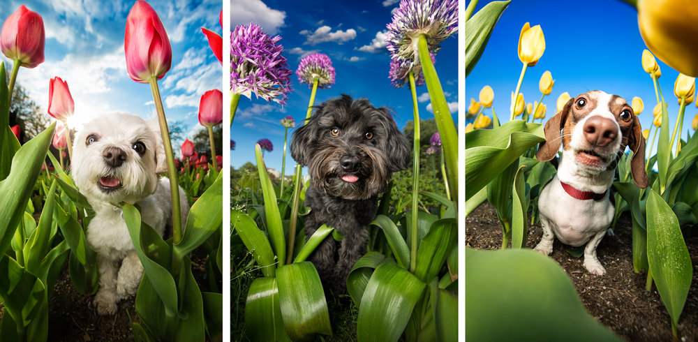 colorful_dog_photography.jpg