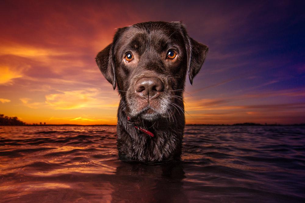 dog_sunset.jpg