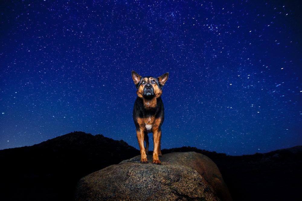 best_commercial_dog_photographer.jpg