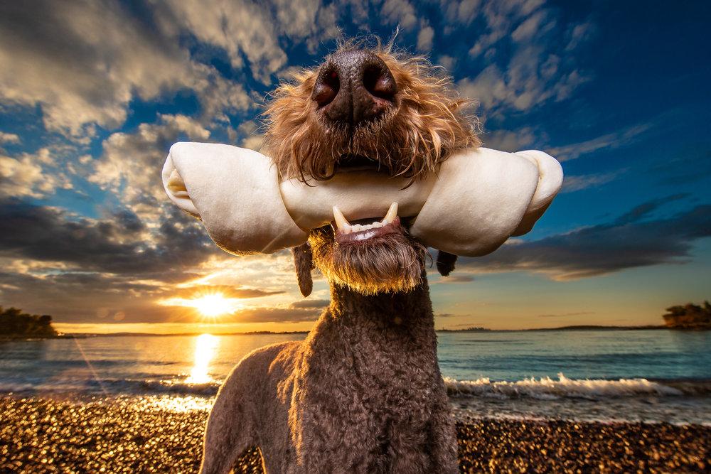 Dog_Bone_Kaylee_Greer.jpg