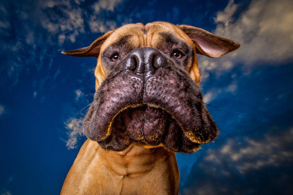 funny-dog-photography.jpg