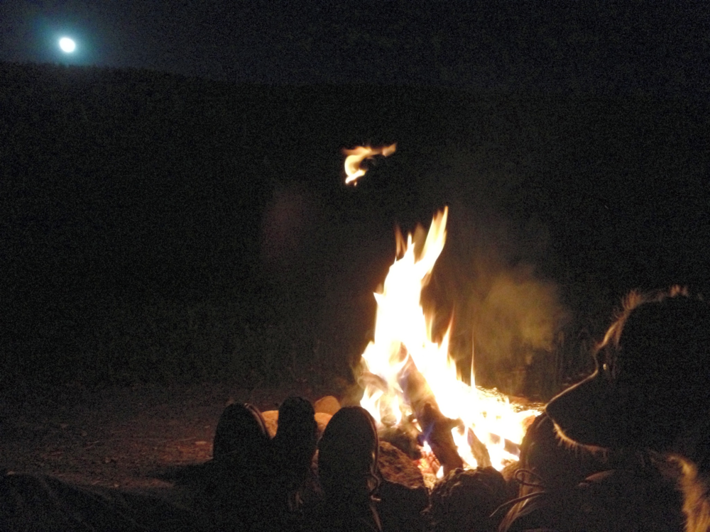 Zaxby enjoying the campfire