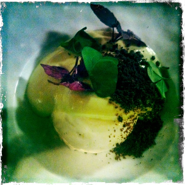 Panna Cotta with Avocado Mousse