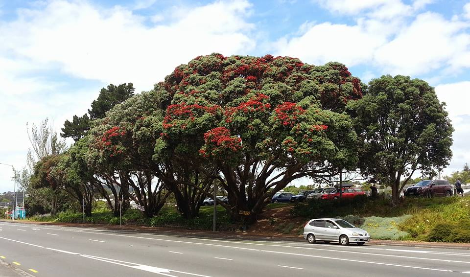 The pohotuKawa Six [facebook]