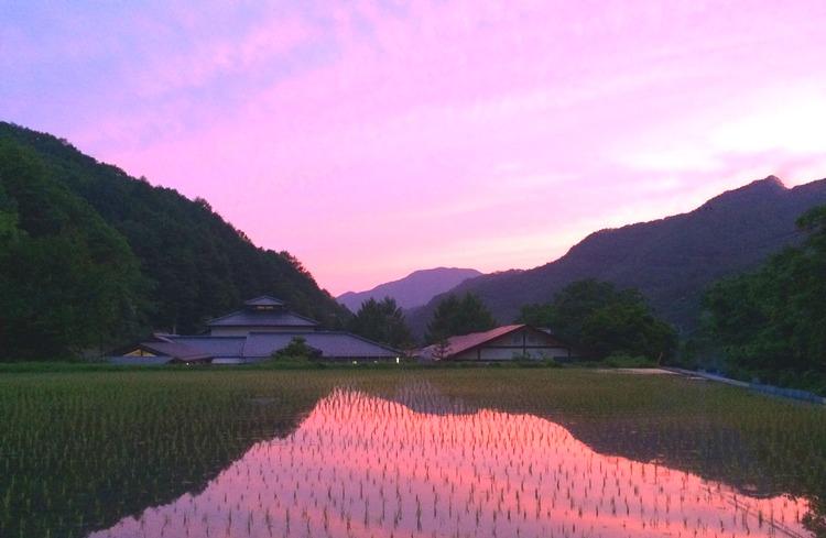 Kväll vid risfältet i Yamanashi, ungefär två timmars färd från Tokyo. Foto: Yuki Nishikawa