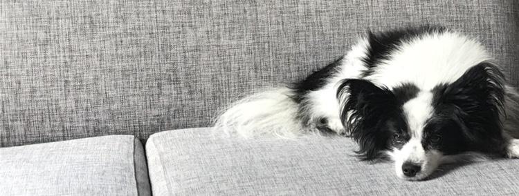 Renn, Sverige kanske enda hund som förstår både svenska och japanska, överräcker stafettpinnen till Vildsvinet vid midnatt.