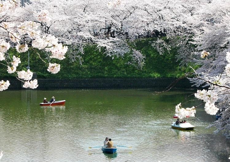 Våren med sina persiko- och körsbärsblomningar är en fin tid. Början av april är tiden som gäller om man är i Tokyo-trakten.  Foto: Public Domain