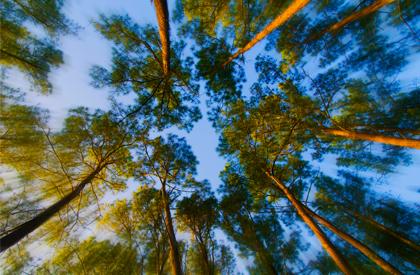 zoomtrees